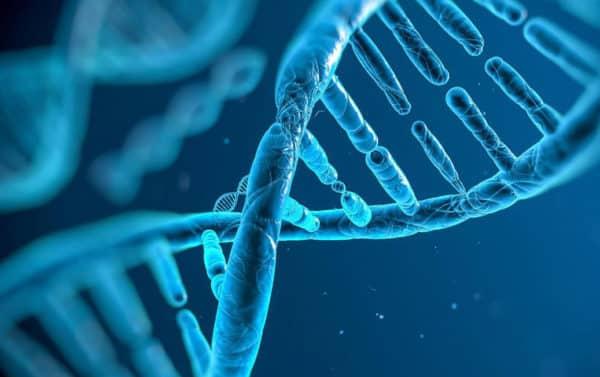 العامل الوراثي - سرطان الثدي - أورام الثدي - BRCA1 - BRCA2 - الدكتور إيهاب فضل - استشاري جراحة السمنة والمناظير - مدرس الجراحة العامة - كلية الطب جامعة عين شمس